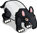 Tapir single