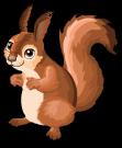 German red squirrel static