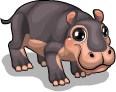 African hippo static