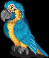 Blue throated macaw single