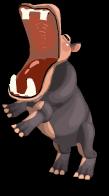 African hippo an