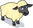 Suffolk Sheep single