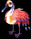 Rosy spoonbill static