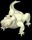 Albino alligator static