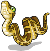 Burmese python single