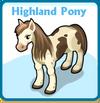 Highland pony card