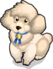 Miniature Poodle single
