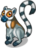 Ring-tailed lemur single