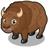 Plains buffalo single