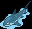 Thresher shark single