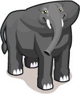 African elephant single