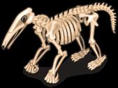 Anteater skeleton single