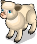 Babydoll Southdown Sheep single