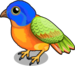 Painted bunting single