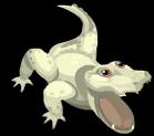 Albino alligator an