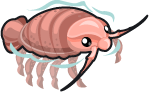Giant Isopod single