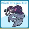 Black dragon fish card