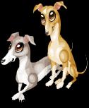 Italian greyhounds static