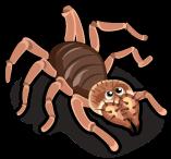 Camel spider single