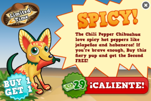Chili pepper chihuahua modal