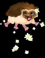 Edelweiss hedgehog an