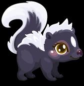 Cubby skunk common single
