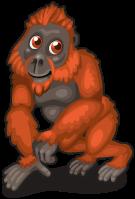 Borneo orangutan single