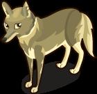 Coyote single