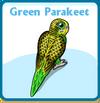 Green parakeet card