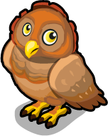 Northern spotted owl single