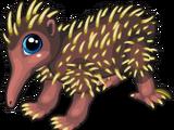 New Guinea Echidna
