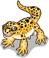 Leopard gecko single