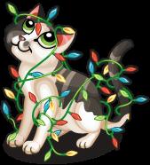 Christmas lights cat single