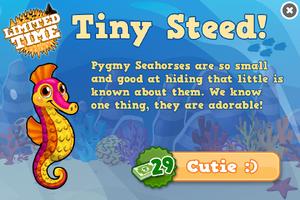 Pygmy seahorse modal