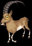 Alpine ibex static