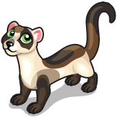 Black footed ferret single