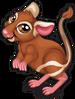 Kangaroo rat single