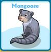 Mongoose card