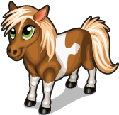 Miniature horse single