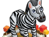Autumn Zebra