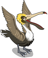 Brown pelican an