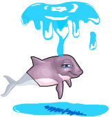 Harbor porpoise an