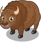 Plains buffalo static