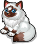 Ragdoll cat single