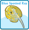 Blue spotted ray card