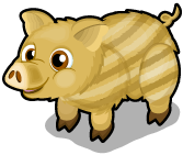 Boar piglet single