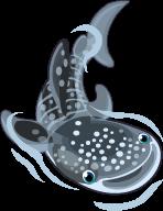 Whale shark single