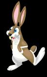 Jack rabbit an