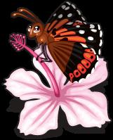 Kamehameha butterfly single