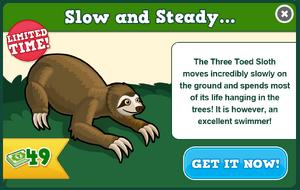 Three toed sloth modal